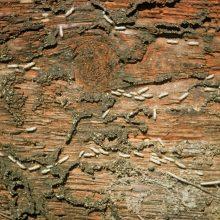 anti-termites - xylophène industrie - Adkalis
