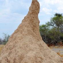 Une termitière en Afrique du Sud.