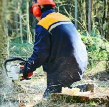 <p>Adkalis : Holzverarbeitende Industrie</p>